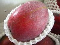 20070721_mango