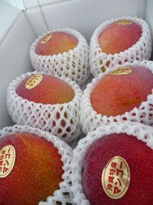 20090702_mango