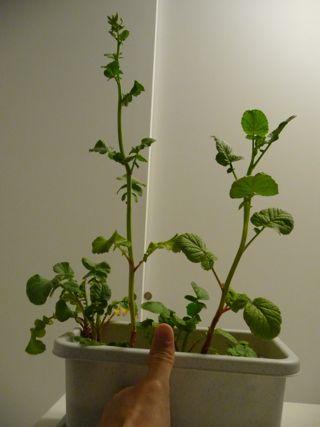 20110321_plant1