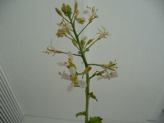20110321_plant3