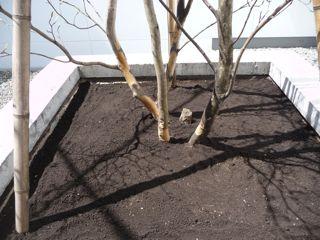 20110709_tree1