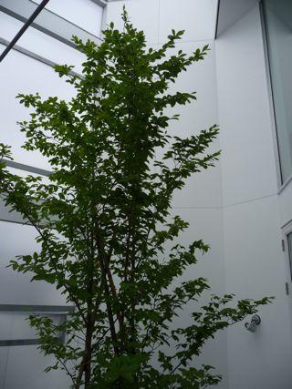20110709_tree2