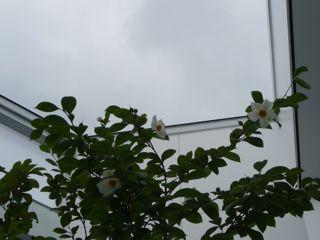 20110709_tree4